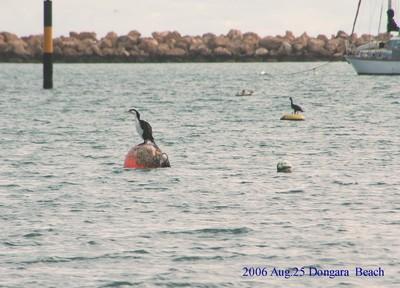 2006aug25dongara_beach07