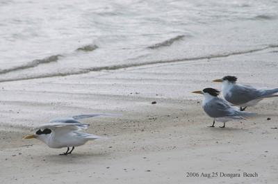 2006aug25dongara_beach16