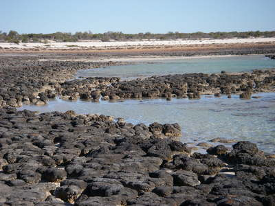 2006aug26_hamelin_pool125