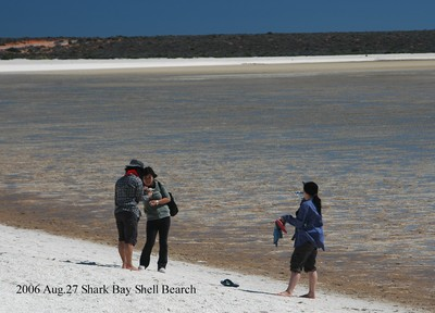 2006aug27_shark_bay_shell_bearch049