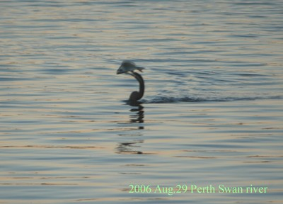 2006aug29perth_swan_river05