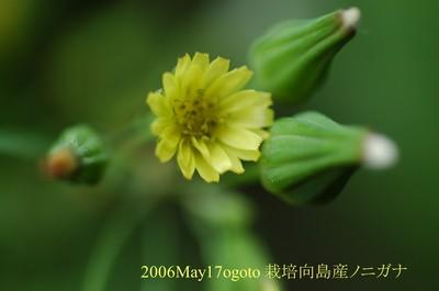 2006may17ogoto_2