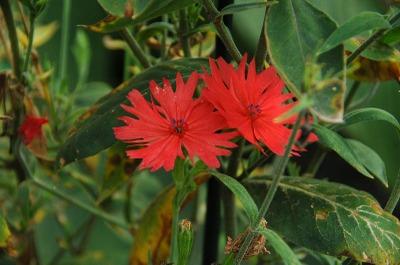 S2007sep15kyoto_botanical_garden048