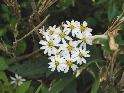 2007oct7_aster
