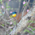 2011jul26_variable_sunbird_marangu_villa_2