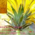 S462004mar15_008