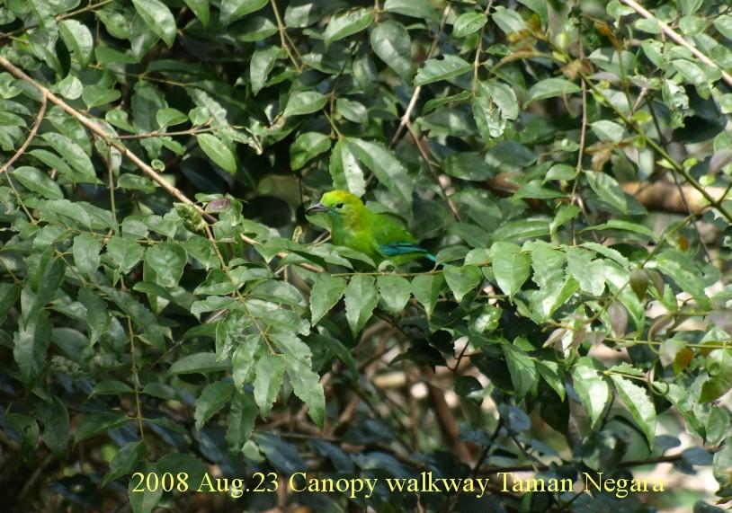 S2008aug23_canopy_walkway058