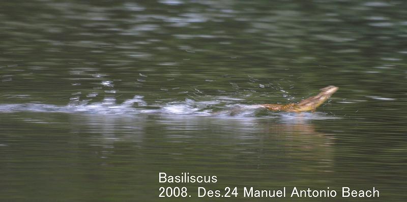 S2008des24_basiliscus_manuel_antoni