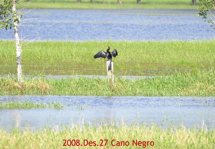 S2008des27_cano_negro_055