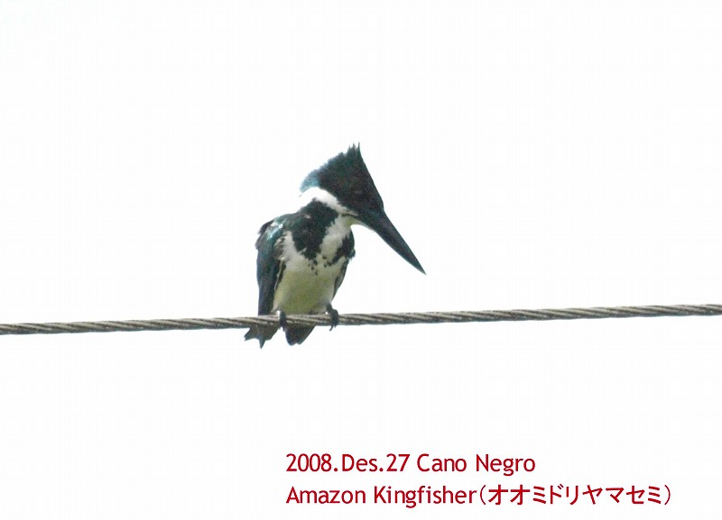 S2008des27_cano_negro_063