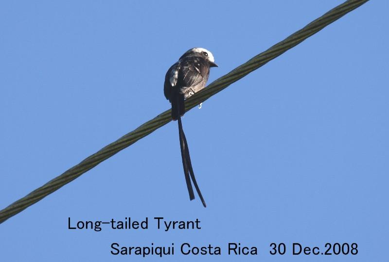 ... には タイ ラン チョウ 科 の 鳥