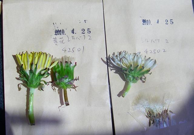 20100425_02
