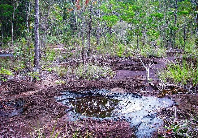 20100819bako_kerangas_forest_047