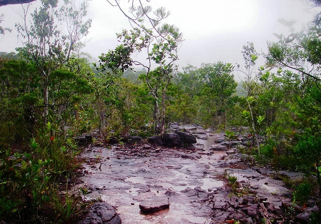 20100819bako_kerangas_forest_128