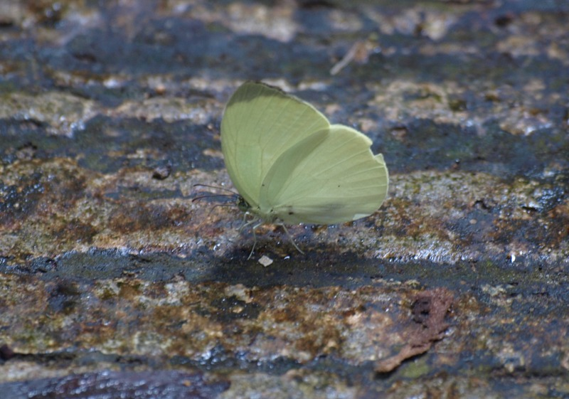 20100823_butterfly_niah_cave_trail4