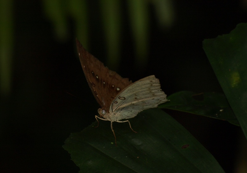 20100823_butterfly_niah_cave_trail5