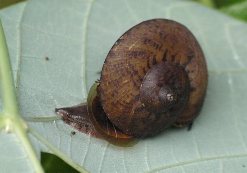 20100823_snail_niah_cave_trail02