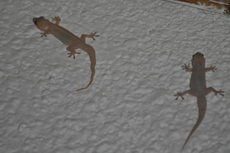 2011jul26_marangu_nakara_hotel22