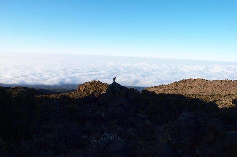 2011jul31_descent_to_mandara_hut010