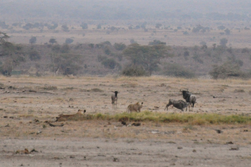 2011aug03_morning_game_drive_ambose