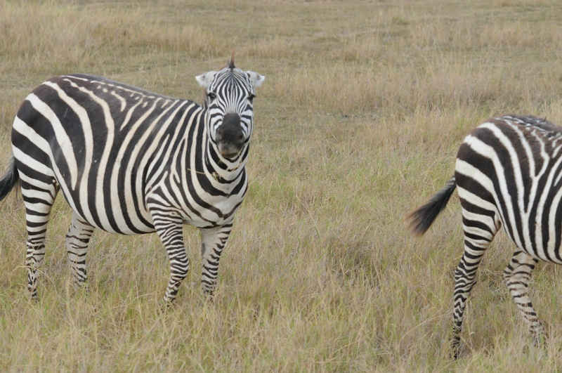 20110803africaj1534