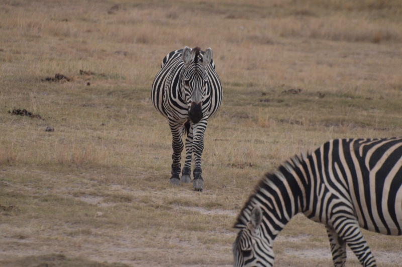 2011aug01evening_game_drive_ambos_2