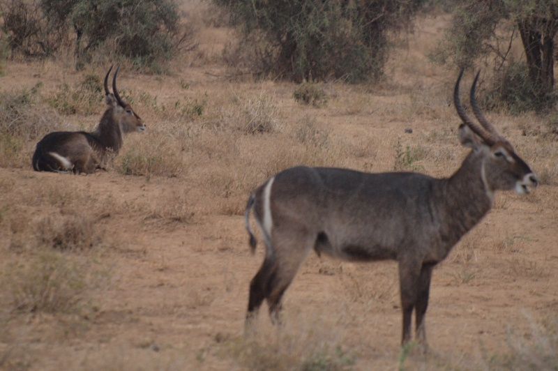 2011aug01evening_game_drive_ambos_3