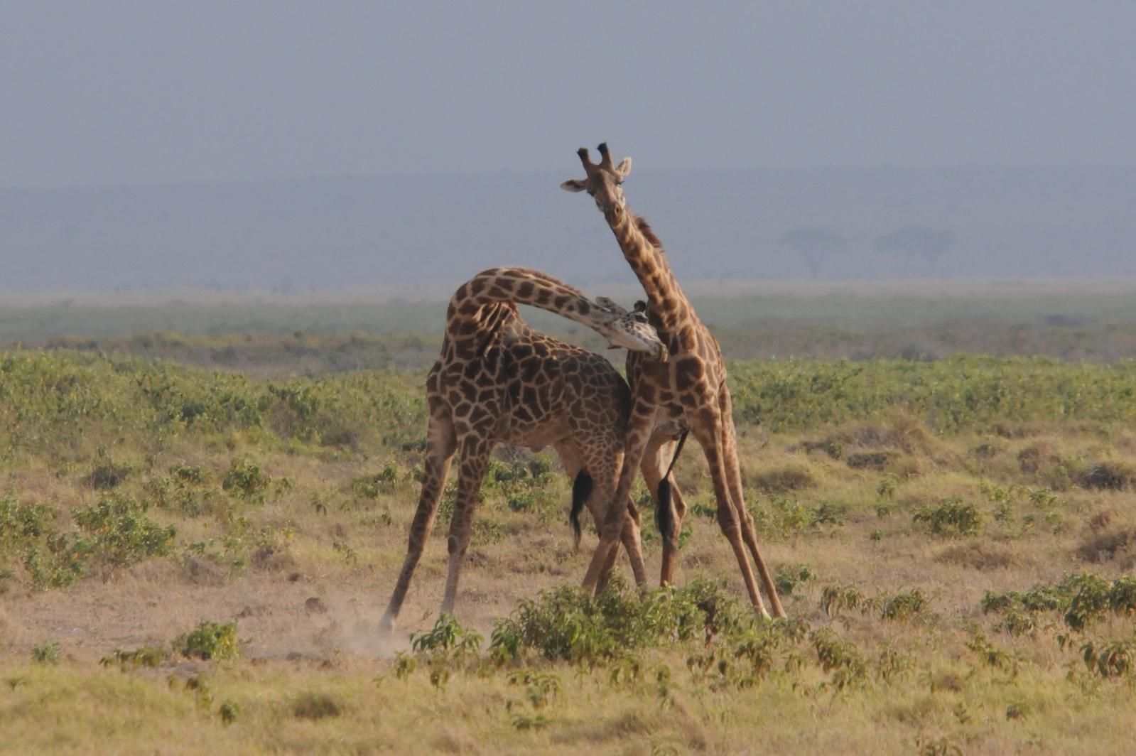 20110803africaj1645