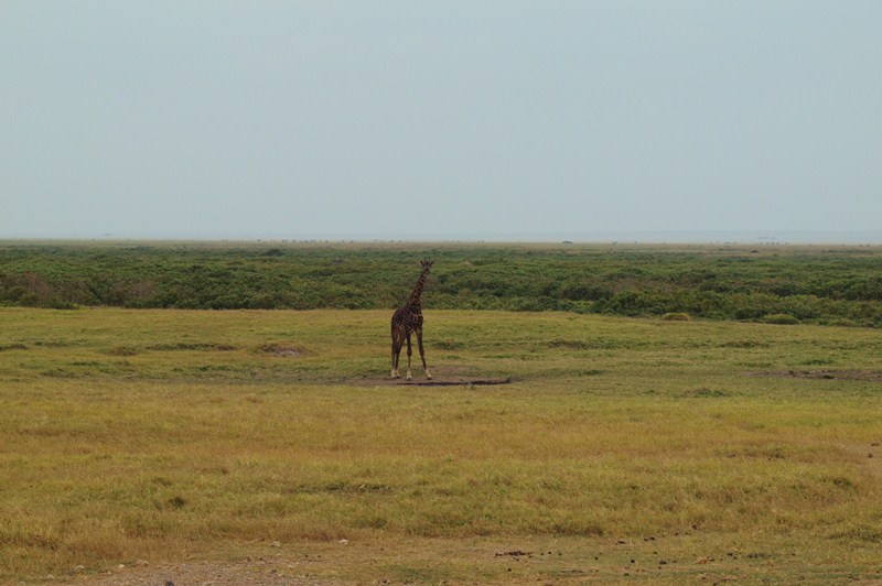 2011aug01evening_game_drive_ambos_4