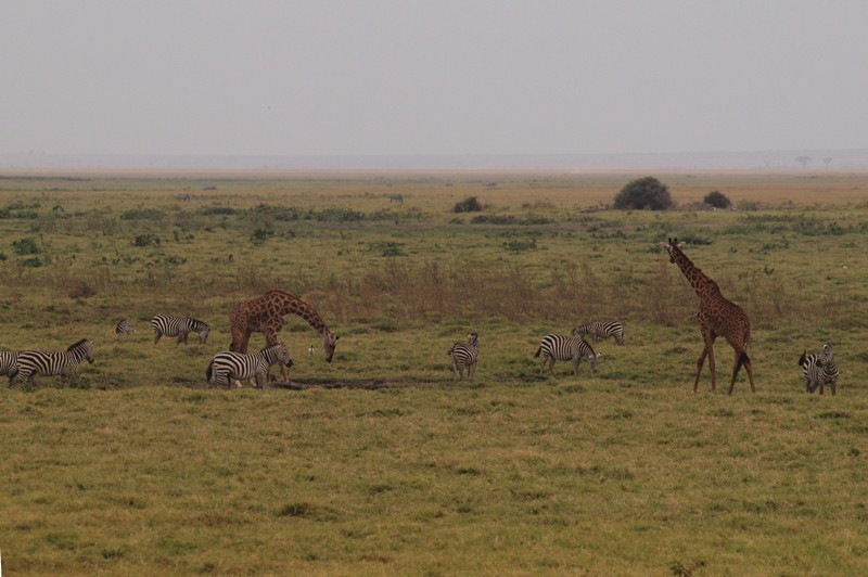 2011aug01evening_game_drive_ambos_5