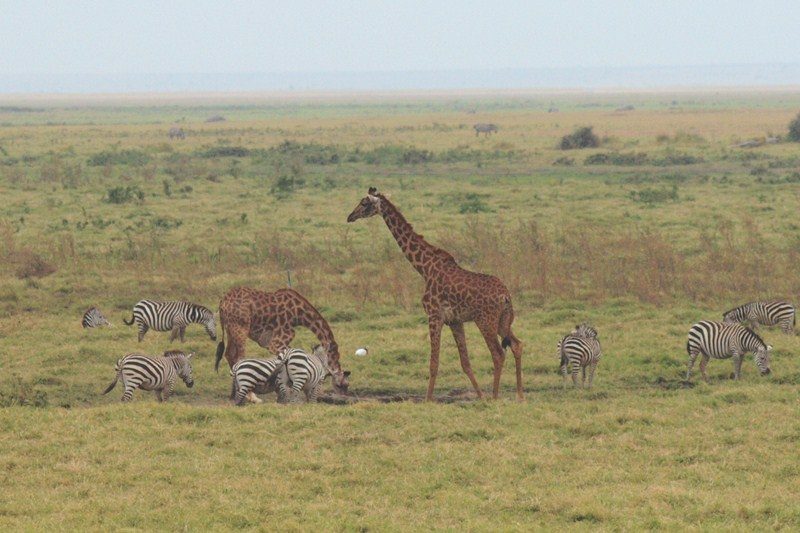 2011aug01evening_game_drive_ambos_6