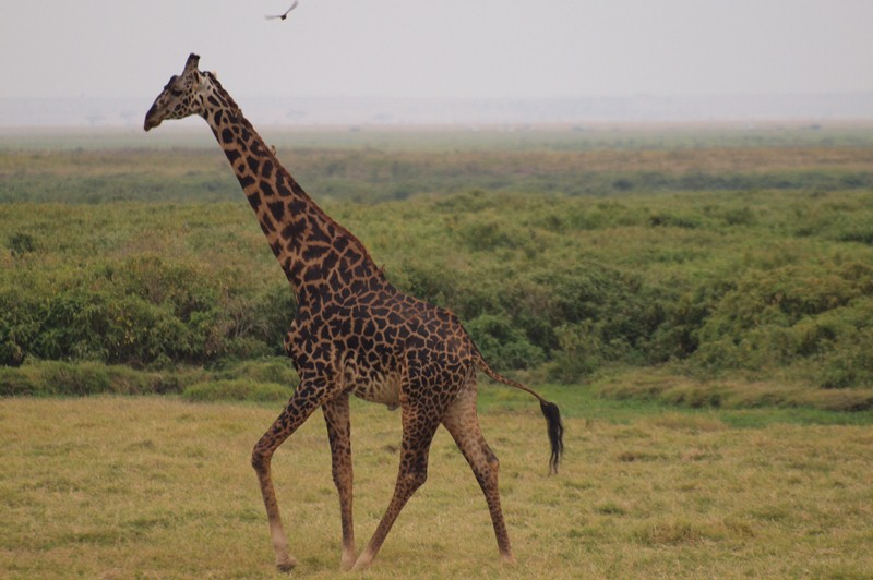 2011aug01evening_game_drive_ambos_7