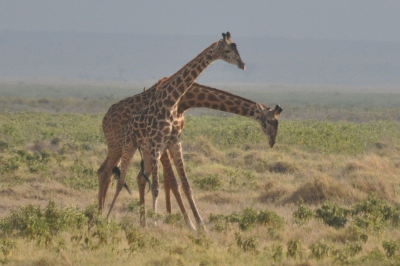 2011aug03_morning_game_drive_ambo_4