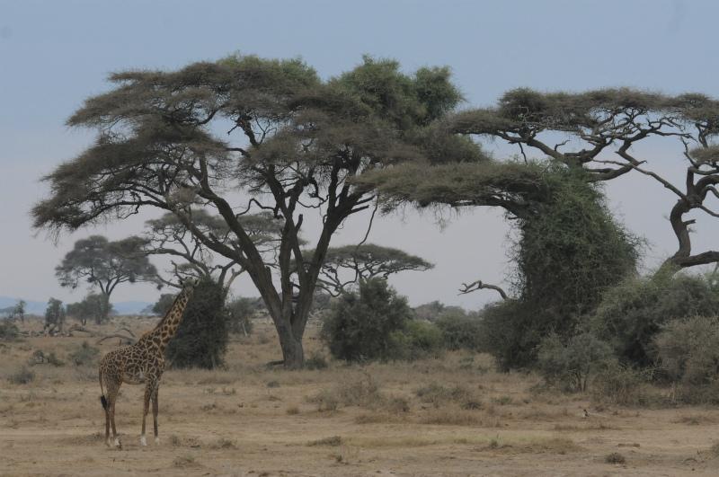 20110801africaj1107