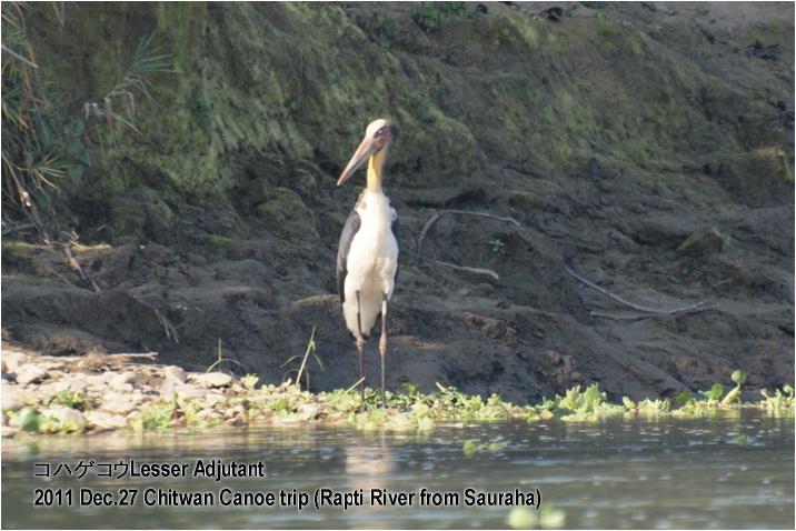 2011_dec27_chitwan_canoe_trip