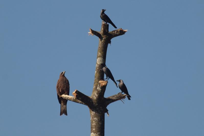 2011dec29_pkhara_birdwatching427
