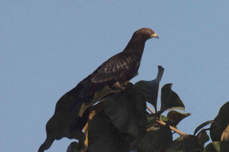 2011dec28_chitwan_wildlifeh26