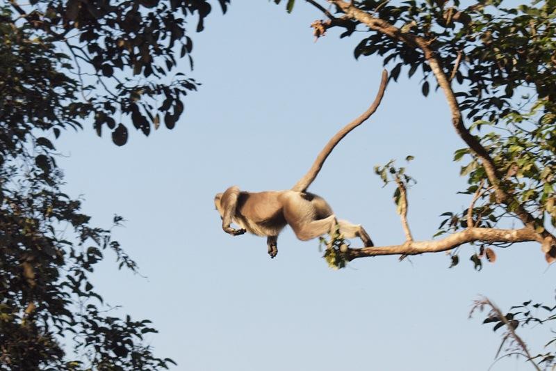 2011dec27_chitwan_jungle_walk243