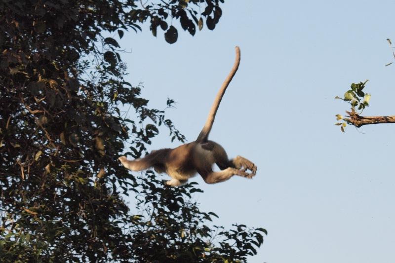 2011dec27_chitwan_jungle_walk244