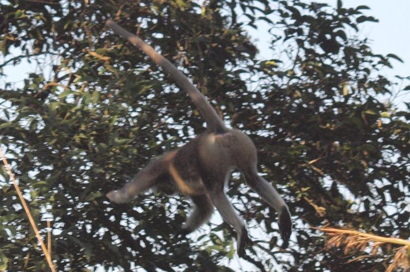 2011dec27_chitwan_jungle_walk245