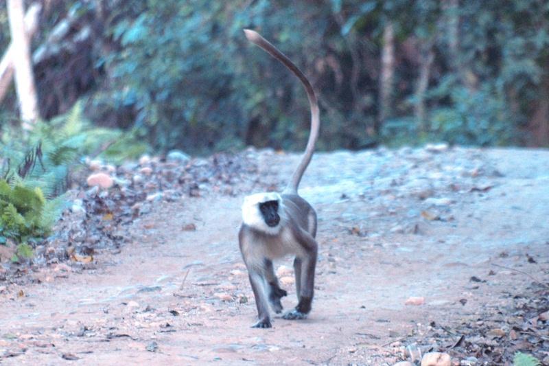 2011dec27_chitwan_jungle_walk347
