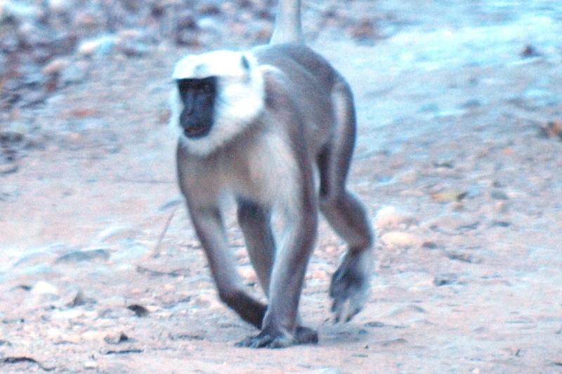 2011dec27_chitwan_jungle_walk349