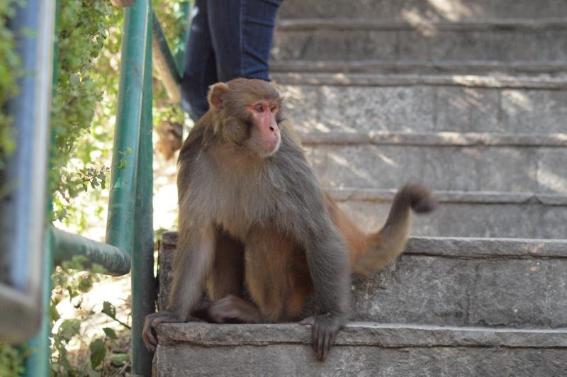 2011dec30_kathmandu_swayambhunoth00