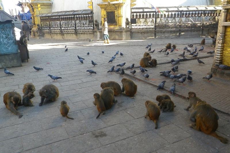 2011dec30_kathmandu_swayambhunoth13