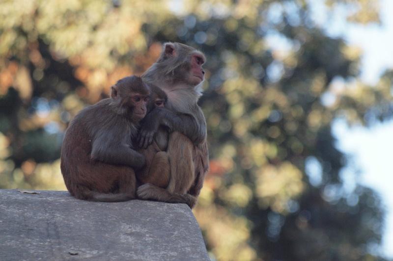 2011dec30_kathmandu_swayambhunoth20