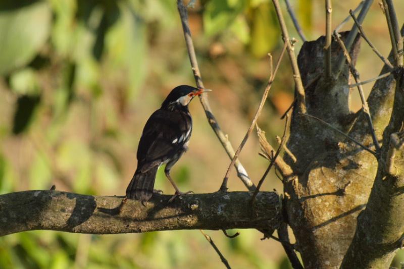 2011dec24_chitwan_sauraha_060
