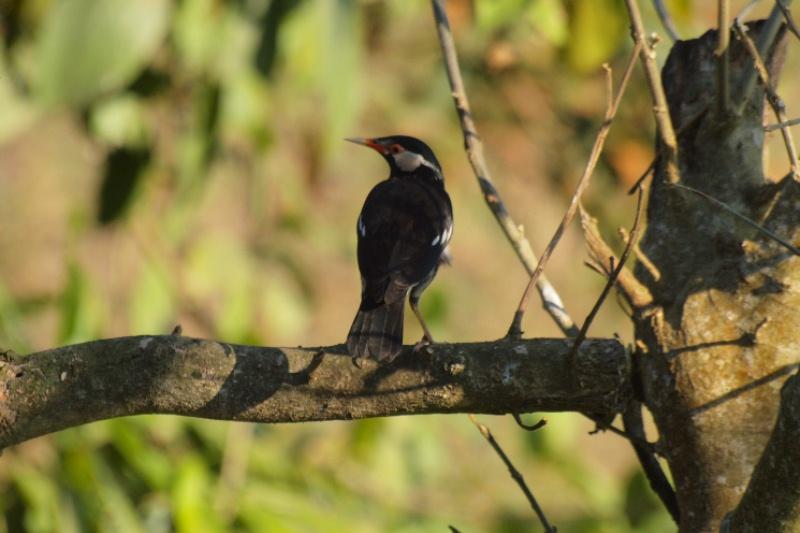 2011dec24_chitwan_sauraha_063