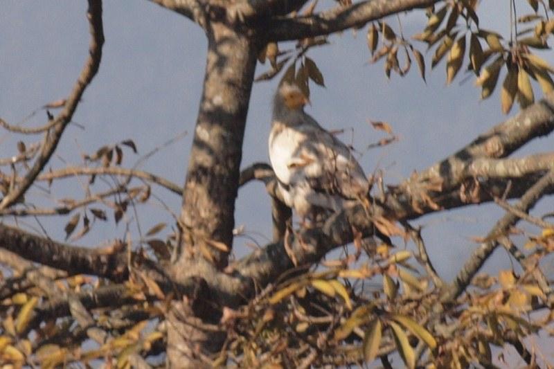 2011dec29_pkhara_birdwatching400