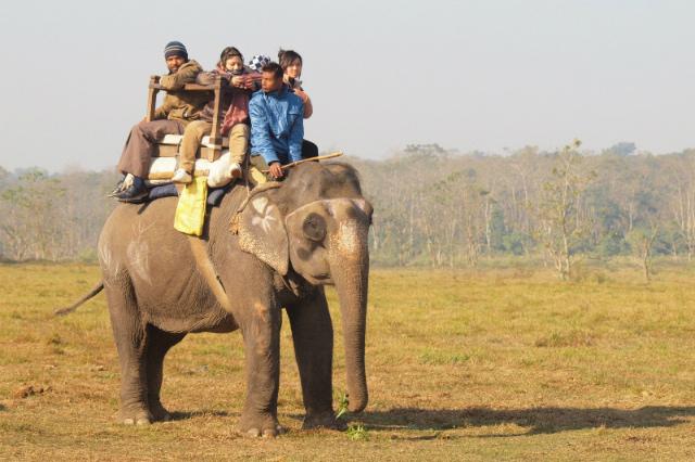 2011dec25_chitowaneiephant_safari00