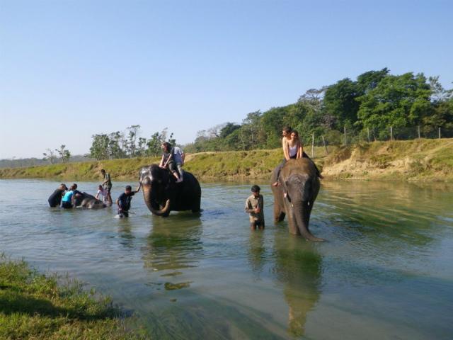 2011dec25_chitowaneiephant_safari40